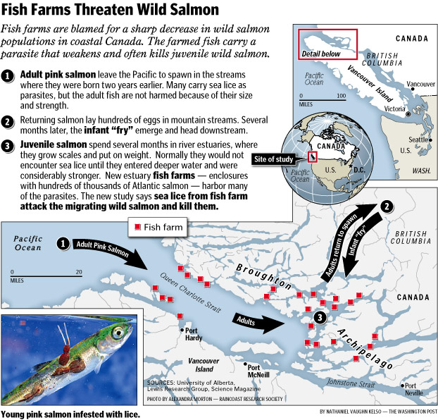 pink salmon map canada